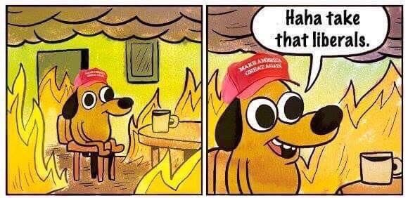 "Donald Trump ""Haha take that liberals"" dog this is fine"